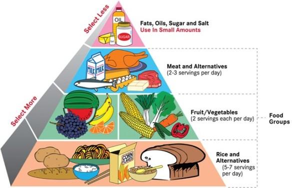 Food Pyramids Jh S Thought 健豪随想